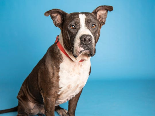 Tank is available for adoption at the Arizona Humane Society's Campus for Compassion off of 15th Ave. and Dobbins in Phoenix. For more information, call 602-997-7585 and ask for animal number 614590.