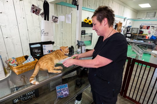 Spring Burrell, owner of Ufuri Pet Salon in Port Huron, tries to take a clipboard out from underneath Scout, one of the cats that lives at the store Tuesday, Sept. 24, 2019. Scout was left behind by a client who couldn't care for him.
