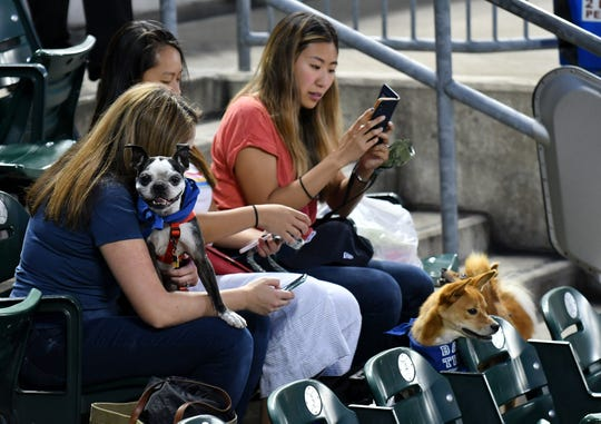 It was Bark in the Park night at Comerica Park. From left, Clyde sits in the lap of Sarah Henry of Detroit, sitting with Linda Yang and Kelly Young, both of Ann Arbor. Linda's dog, Riley, is bottom right,with Kelly's dog Kiwi behind him.
