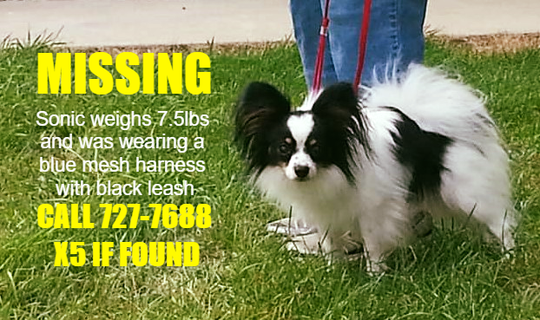 A small dog, named Sonic, went missing from near his home at 29th Street and Central Avenue on Tuesday evening.