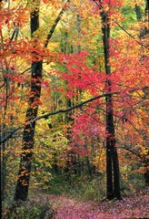 Owen-Putnam State Forest in Spencer is southwest of Indianapolis and is a great spot to see fall foliage.