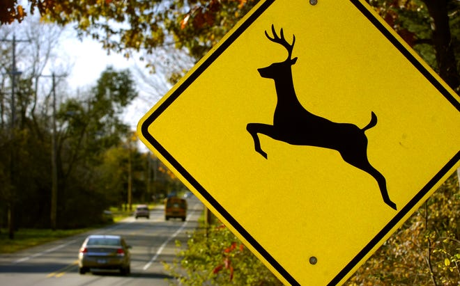 A deer crossing sign on Forest Road.