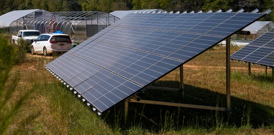 Solar panels on Ireland Farms in Alpine, Ala., are seen on Wednesday September 25, 2019. A Democratic candidate for Public Service Commission President has sued the PSC over a video recording ban of a November 21 meeting on solar panel fees.