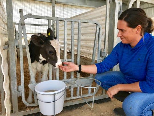 Stacey Shipley Atherton cares for a calf at the Shipley Dairy Farm in McKean Township.