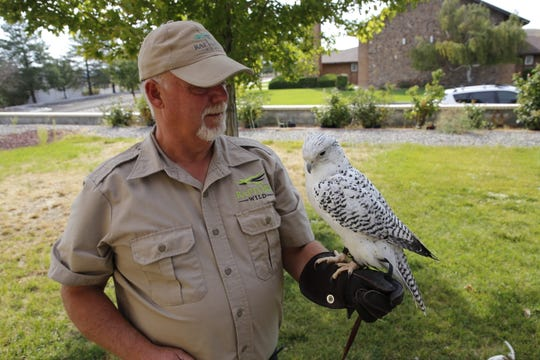 Mike Fauteaux of Raptors Wild displays Comet, a 19-year-old white male gyrfalcon native to the Arctic.