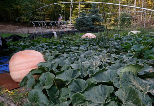 Tony Scott's pumpkin patch at his home in Wappingers Falls on September 24, 2019.
