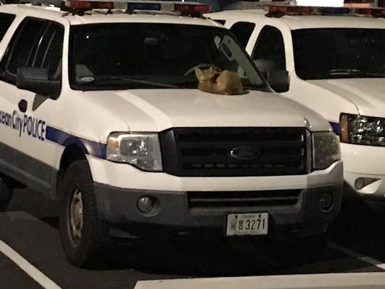 A fox relaxes on the hood of an Ocean City Police vehicle in September 2019.
