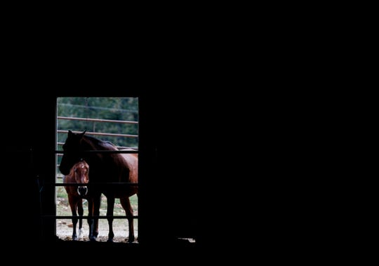 A pair of horses look into the indoor arena at Sac River Stables during the Greene County agriculture tour on Wednesday, Sept. 25, 2019.