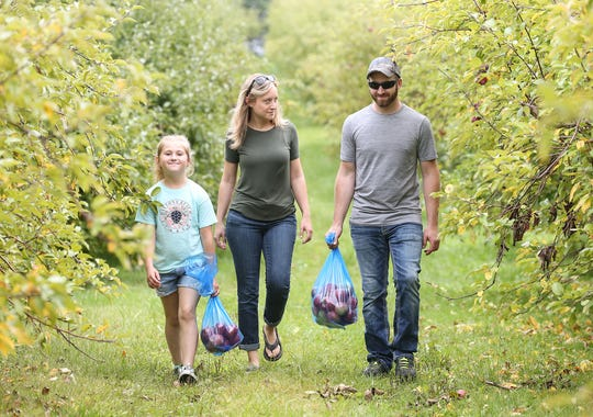 Gretchen Preisler, Brittany Werth and Derek Rese gather Honeycrisp apples at Hofacker's Hillside Orchard last month in Appleton.