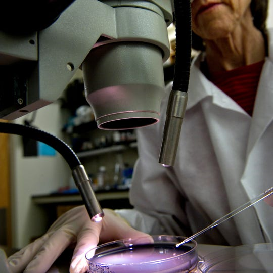 A CDC microbiologist examines a plate for legionella growth.