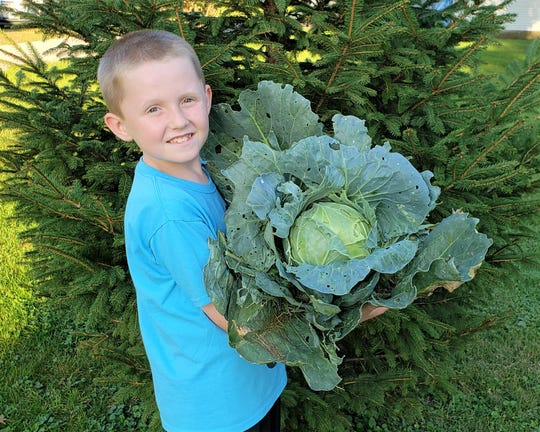 Caleb Seibert, holds a mega cabbage planted over the summer.