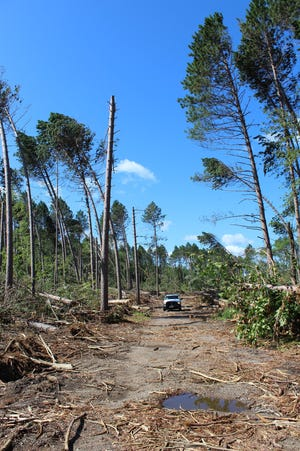 A view of a road in the Lakewood-Laona Ranger District of the Chequamegon-Nicolet National Forest that is being cleared after the July 19-20 windstorm.