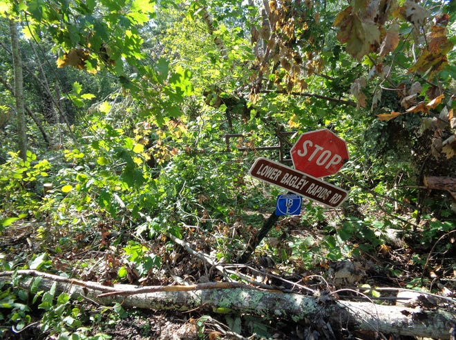 In a photo taken Sept. 3, downed trees can be seen looking west onto the 18 Corridor trail at the intersection of Bagley Rapids Roard, just north of Kingston Road in northern Oconto County.