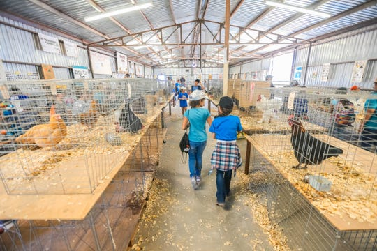 Children look at chickens at the Southern New Mexico State Fair & Rodeo in Las Cruces on Thursday, Sept. 26, 2019.