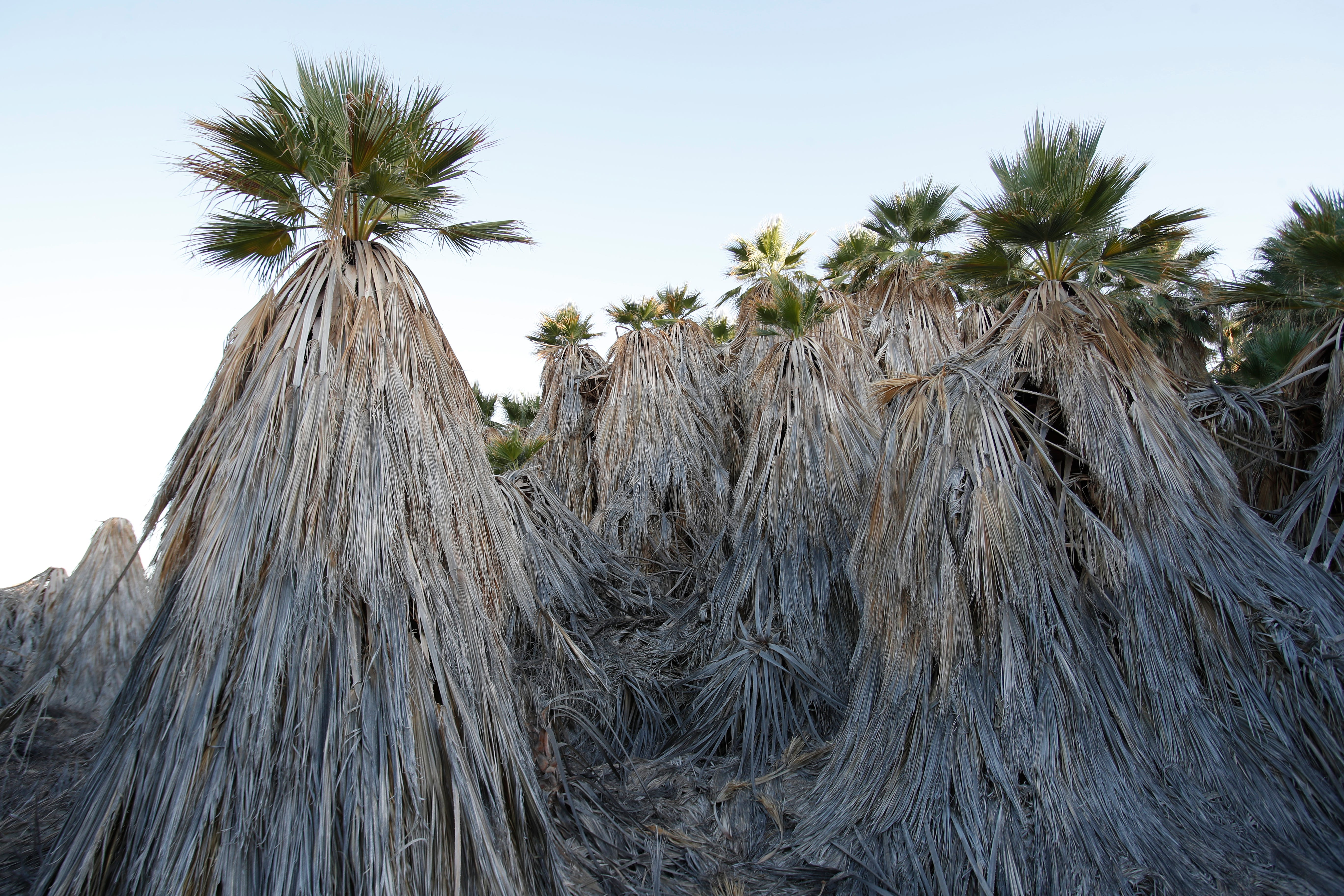 In 1870, a prospector named Charley Clusker claimed to have found remains from a Spanish galleon near Dos Palmas, now a preserve on the Salton Sea's northeastern shore.
