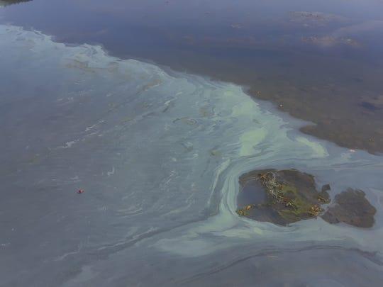 Blue-green algae bloom on Canadice Lake, September 21