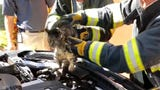 Titusville firefighters gingerly extricated a cat named Suba Mae from the engine compartment of a Mercedes-Benz on Sept. 27, 2019