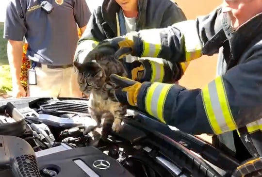 Titusville firefighters rescued a cat from the engine compartment of a Mercedes-Benz on Friday morning.