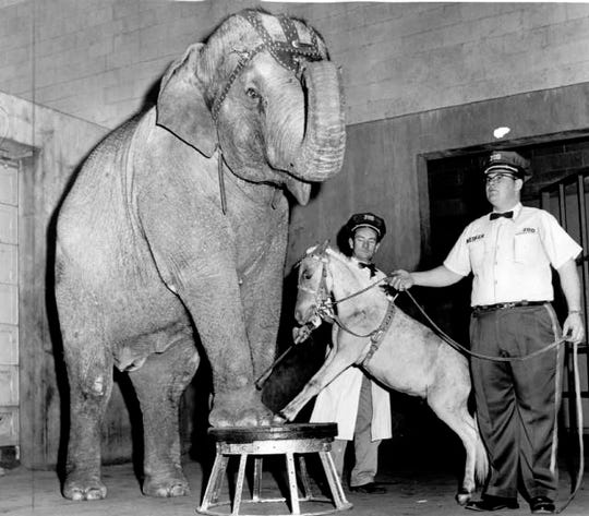 Bunny and Dynamite the pony rehearse for act at Mesker Zoo; trainers are Louis Rhoades (right) and Jack Thompson (background); photo dated April 1, 1961