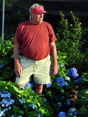 Mike Dirr looking over some of his newer hydrangea breeding efforts.