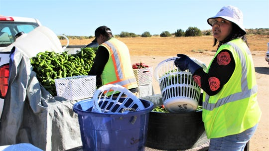 Shelia Thompson washes a barrel of award winning Navajo Green Chiles at Navajo Agricultural Products Industry.