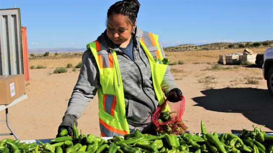 Elaina Viola sorts through a recently picked batch of Navajo Pride Green Chiles at Navajo Agricultural Products Industry.