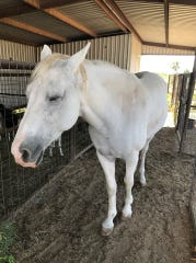 This horse was found near 35th and Blum Streets in San Angelo on Sept. 27, 2019.