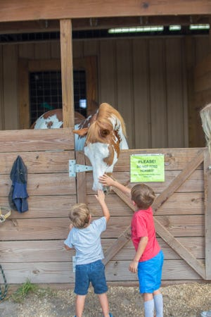 Barn tours will be available at the Equine Rescue & Adoption Foundation's 2019 Country Festival on Oct. 20.