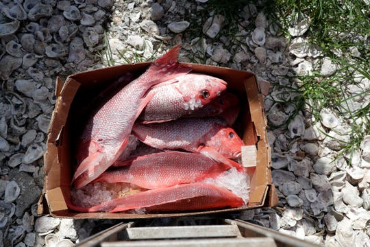 Descaled red snapper rest in a box outside Lynn's Quality Oysters in Eastpoint, Florida before being sold.