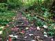 Fallen leaves litter the Burlington Wildway in Burlington  on Sunday, Sept. 29, 2019.