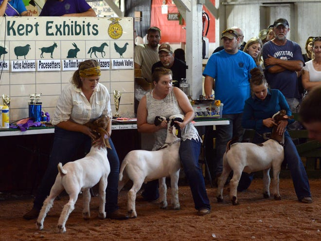 Plans are being reviewed and finalized for a junior fair only this year for Coshocton County that would allow youth to show animals.