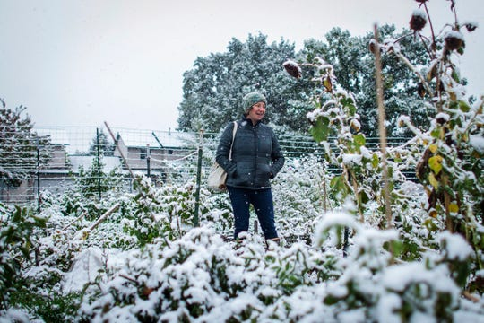 Garden City Harvest grower Brihannala Morgan gazes over her five-row plot after harvesting the last of what she could from the plants in snow that hit Missoula, Mont., Sunday.