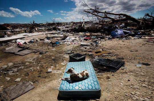 A dog rests on a bed in the wiped out part of the Mudd community in Marsh Harbour in the Bahamas on Wednesday, September 25, 2019. The island was heavily damaged in Hurricane Dorian three weeks earlier. The Mudd community is where many fatalities came from. More are expected.