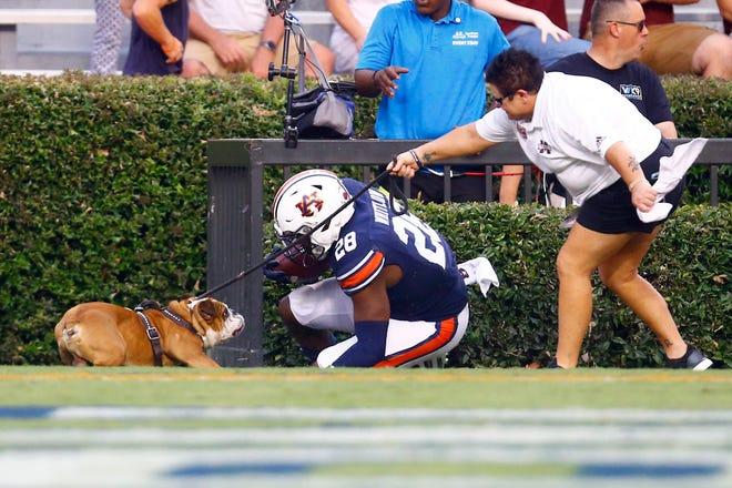 Auburn running back JaTarvious Whitlow (28) runs into the mascot for Mississippi State after scoring a touchdown on Saturday, Sept. 28, 2019, in Auburn, Ala.