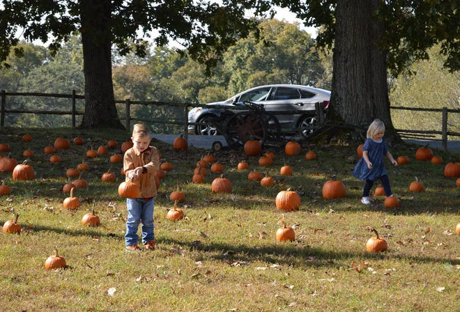 HarvestFest celebrates the end of the season with pumpkins, food trucks, and more.