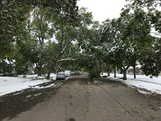 Trees sag over 4th Avenue North from the weight of heavy snow that fell over the weekend.