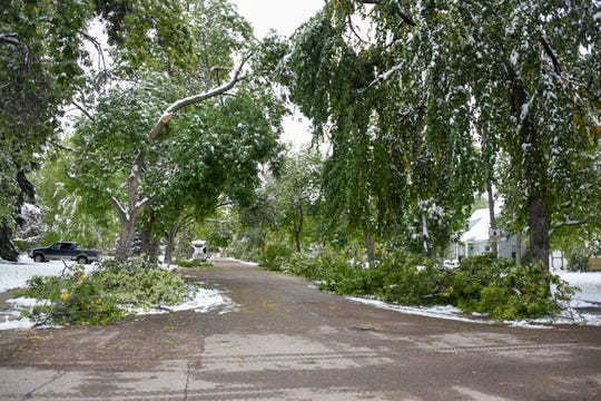 Damaged trees line 4th Avenue North in the wake of a major snow storm over the weekend.