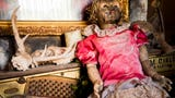 Take a sneak peek of haunted attraction Dead Man's Farm, which is now at a new location in Philadelphia, Tenn.