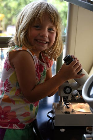 Lillian Barnes, 5, enjoys peering through a microscope. Rookery Bay offered free admission and a host of activities at their Environmental Learning Center on Saturday for National Estuaries Day.