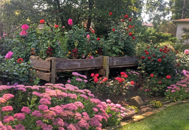 This cow trough is filled with small dahlias, marigolds and coleus and creates an interesting backdrop for sedum, roses, dahlias. Imagination is the limit when you're creating planters.