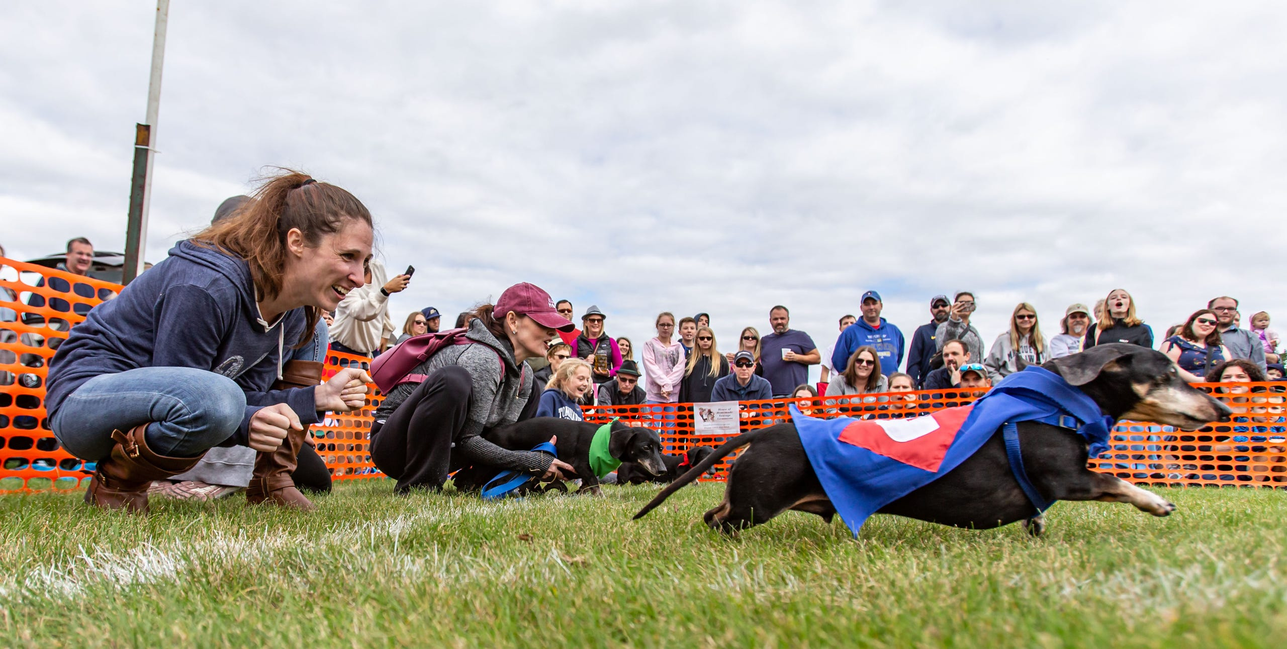 Pint-sized pups compete in the popular Dachshund Dash event during the 25th annual Germantown Hunsrucker Oktoberfest at Dheinsville Historic Park on Saturday, Sept. 28, 2019. The free family oriented event features music, dancing, food and drink, games and more.