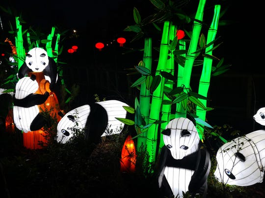 A lantern exhibit featuring pandas and  bamboo is on display at the Racine Zoo's lantern festival.