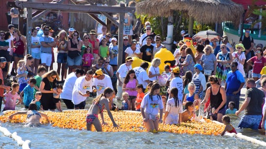 Five thousand little yellow rubber ducks make their way to shore as children and adults splash and jump in encouragement during the 2018 Great Duck Derby at Capt. Hiram's Sand Bar in Sebastian.