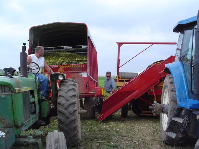 Greg Blonde, center, former Waupaca County Agriculture Agent UW-Madison Division of Extension, collects a corn silage sample being unloaded from a chopper box into a silage bagging machine at the Boerst farm near Manawa, Wis. Crop moisture levels can be determined by bringing whole plant samples to silage dry down events commonly hosted by regional Forage Councils and agriculture cooperatives.