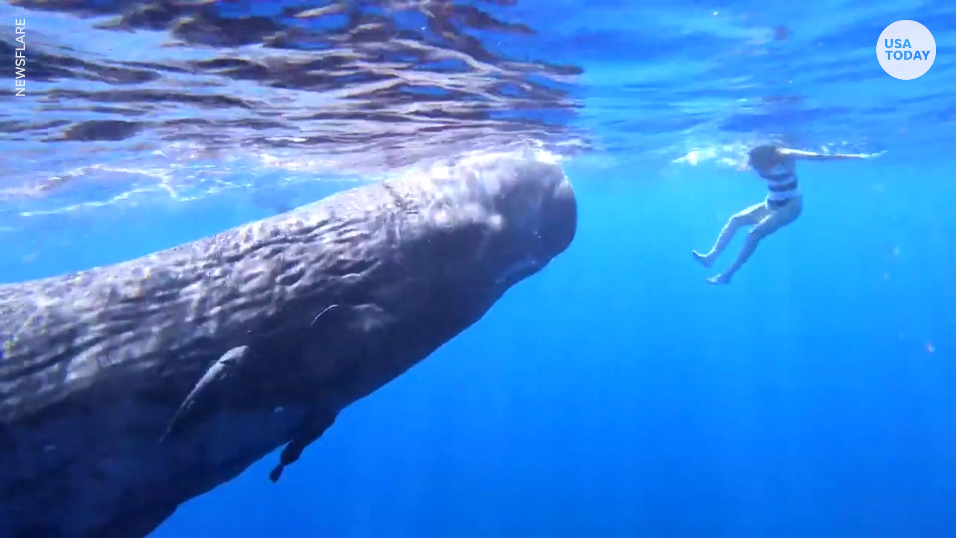 Instagram influencer swims with gigantic baby sperm whale in Indian Ocean