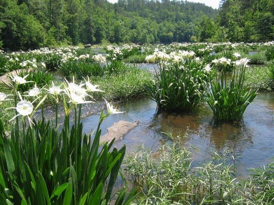 """""""There's very little pressure on it,"""" Hall says of Alabama's Cahaba River. """"A fish that doesn't get fished for, bites more readily."""""""