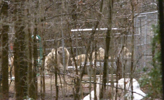 Feb. 08, 1999. Some of the dogs on the Tiger Lady Joan Byron-Marasek's property along Rt. 537 in Jackson Twp.