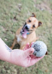 Kristina Lachut holds out an Ohio State ball as Jeter, a rescue dog, waits for her to throw it Tuesday morning at the new Chillicothe Dog Park.