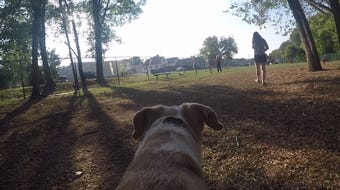 Get a tour of the new Chillicothe Dog Park, courtesy of Poppy, who belongs to Gazette reporter Toria Barnhart.