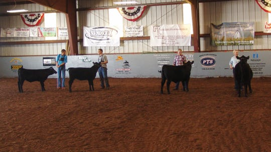 "Exhibitors line up with their Angus heifers during the beef breeding competition Monday in Hunter Arena. Heifers and cows of different breeds are judged on characteristics that make them ideal for breeding. Participation is a good way for kids to promote the beef industry, said 4-H adviser Scott Graves. ""We have good quality stock in this country,"" he said."